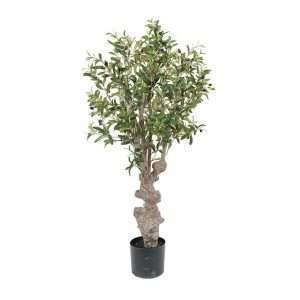 olientre mr plant